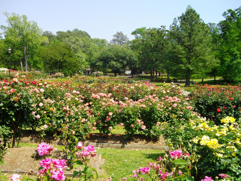 Rose Garden in Tyler, Texas
