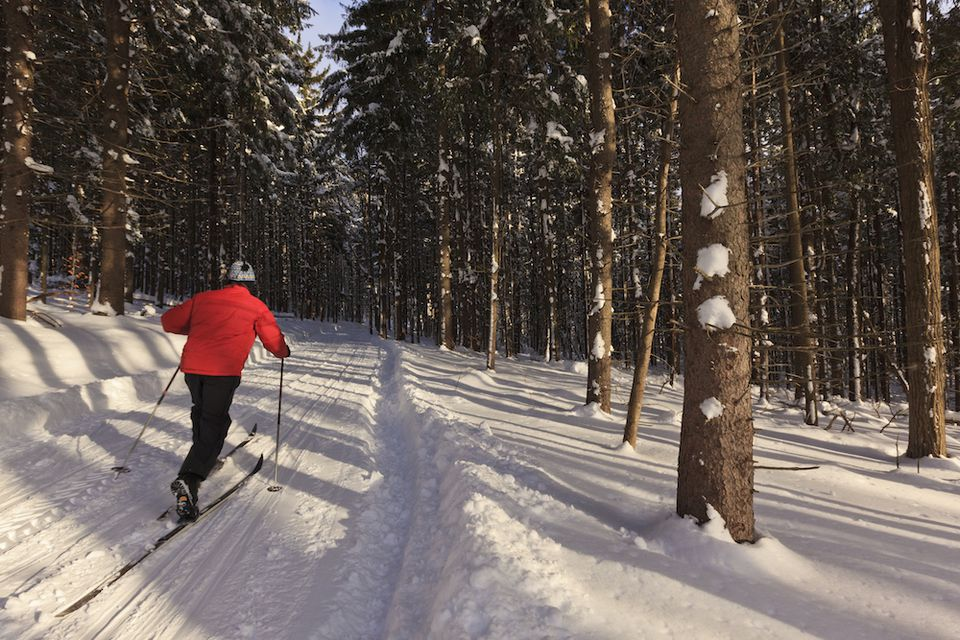 A cross-country skier in the forest