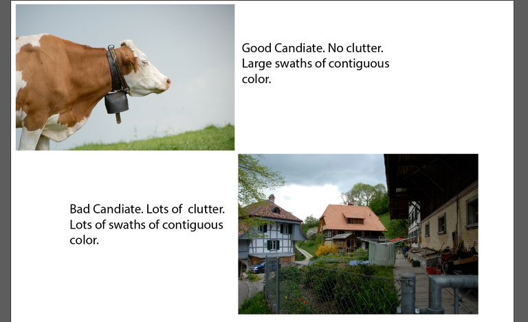 Image shows a cow and another image of a village. The village image has clutter and not a good candidate.