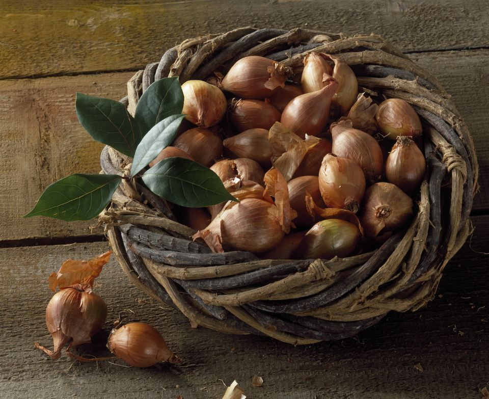 Harvest of shallots 'Cuisse de poulet' in a basket