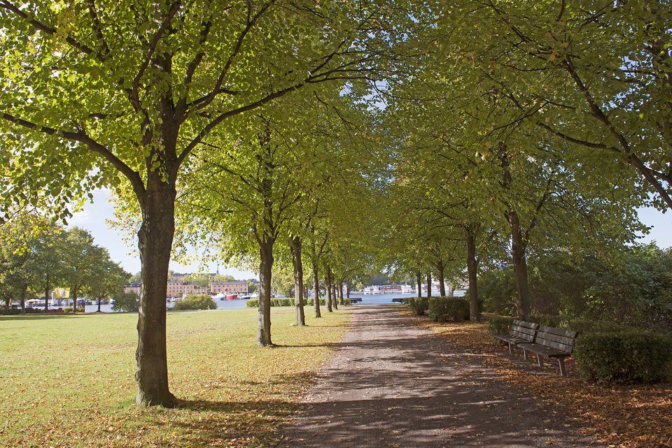 Djurgarden in Stockholm