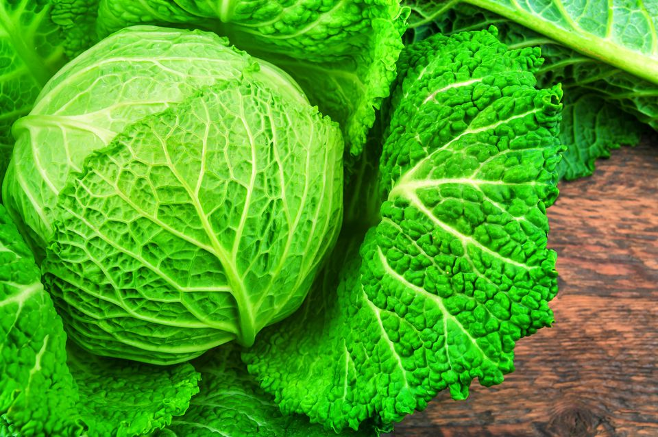 ripe and lush savoy cabbage