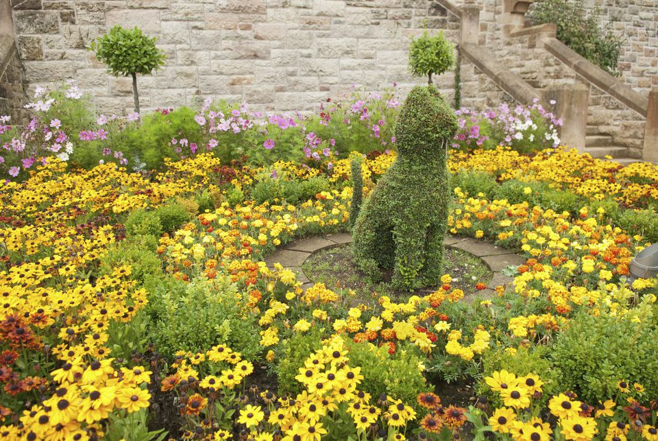 A Shrub Trimmed Into The Shape Of A Cat At Belfast Castle