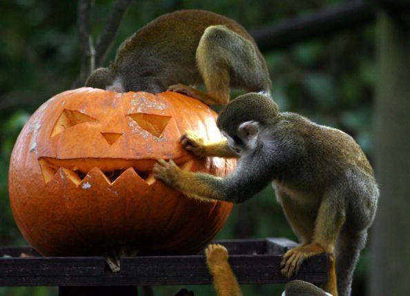 spooky halloween events in salt lake city - Wheeler Farm Halloween
