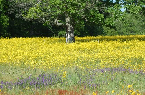 Wildflower meadow picture.