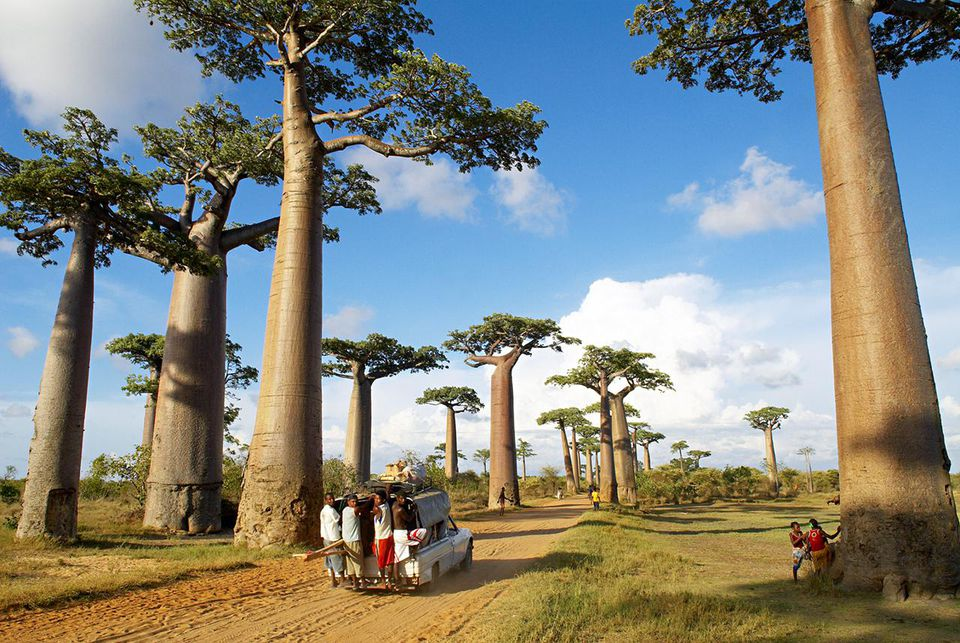 Madagascar Travel Guide Essential Facts and Information Baobabs