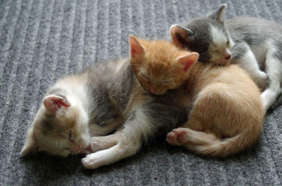 Kittens cuddling together on floor