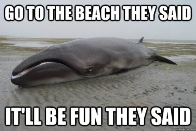 Funny Memes For Kids Animals : The 20 funniest animal memes