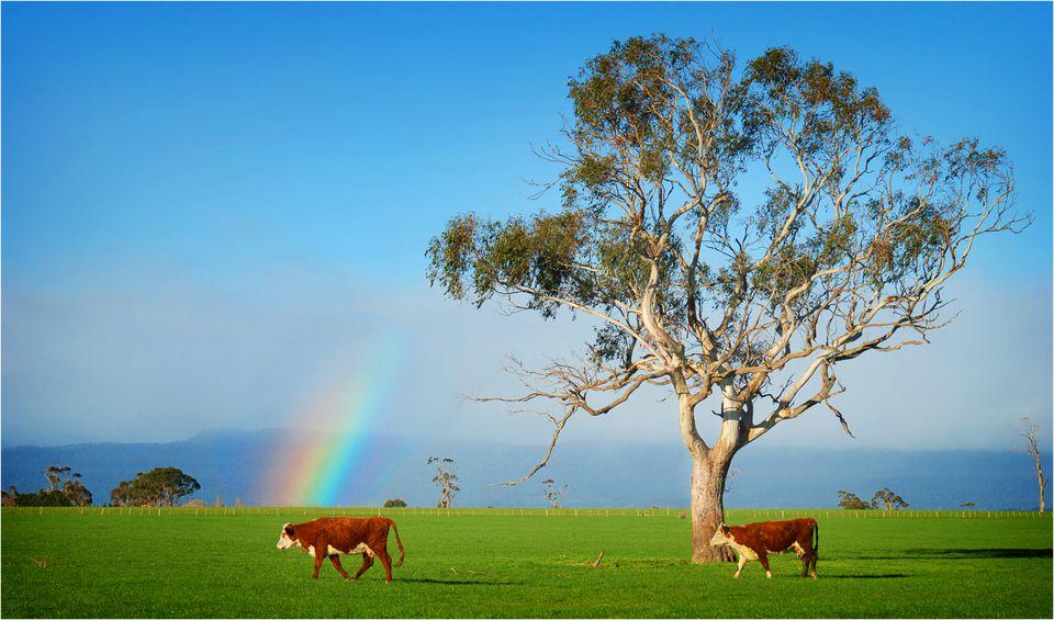 rainbow over pasture in Australia
