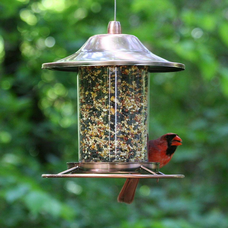 perky-pet-bird-feeder