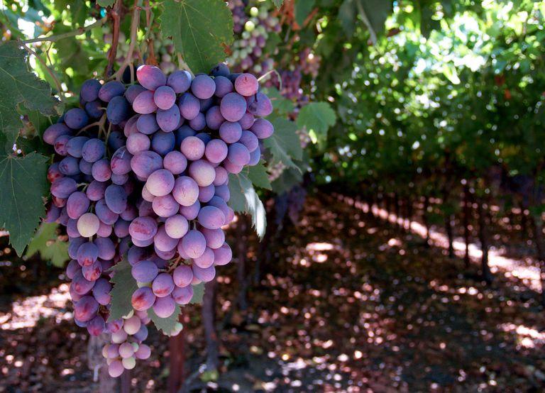 21st birthday vineyard tour