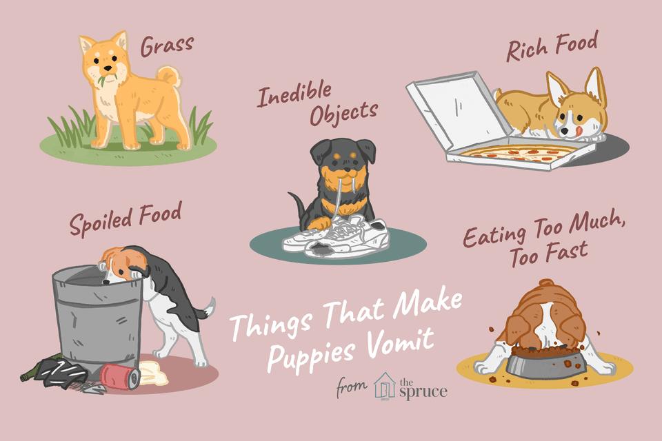why puppies vomit