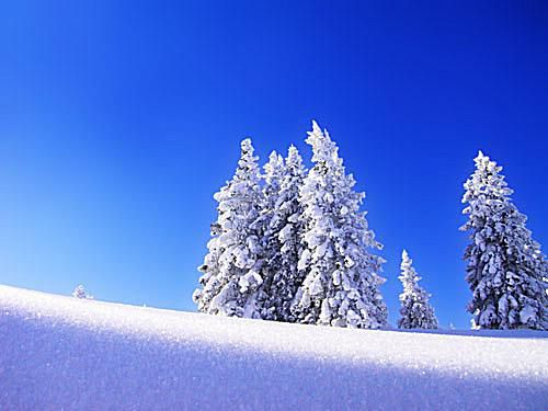 Screenshot of a winter wallpaper with a blue sky and snowy trees