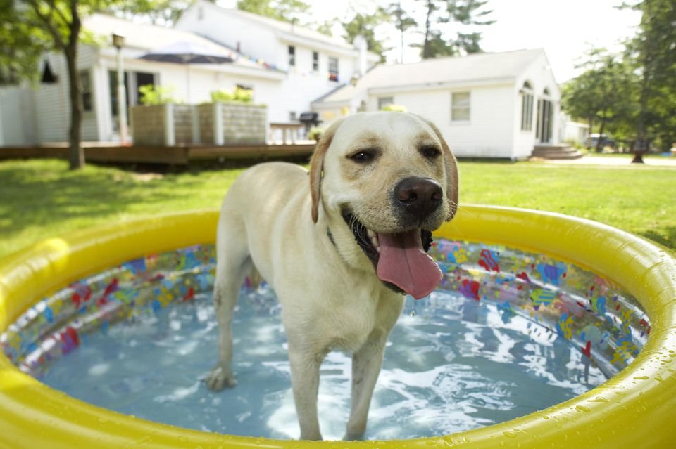 Dog in inflatable pool