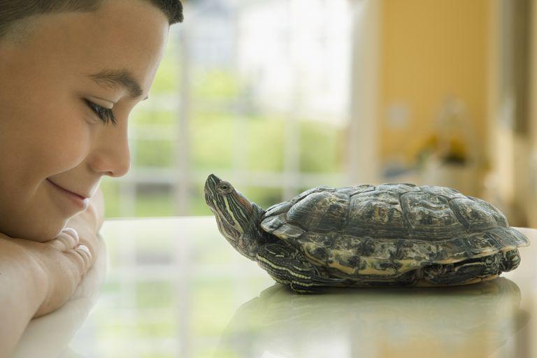 Close up of Hispanic boy smiling at turtle
