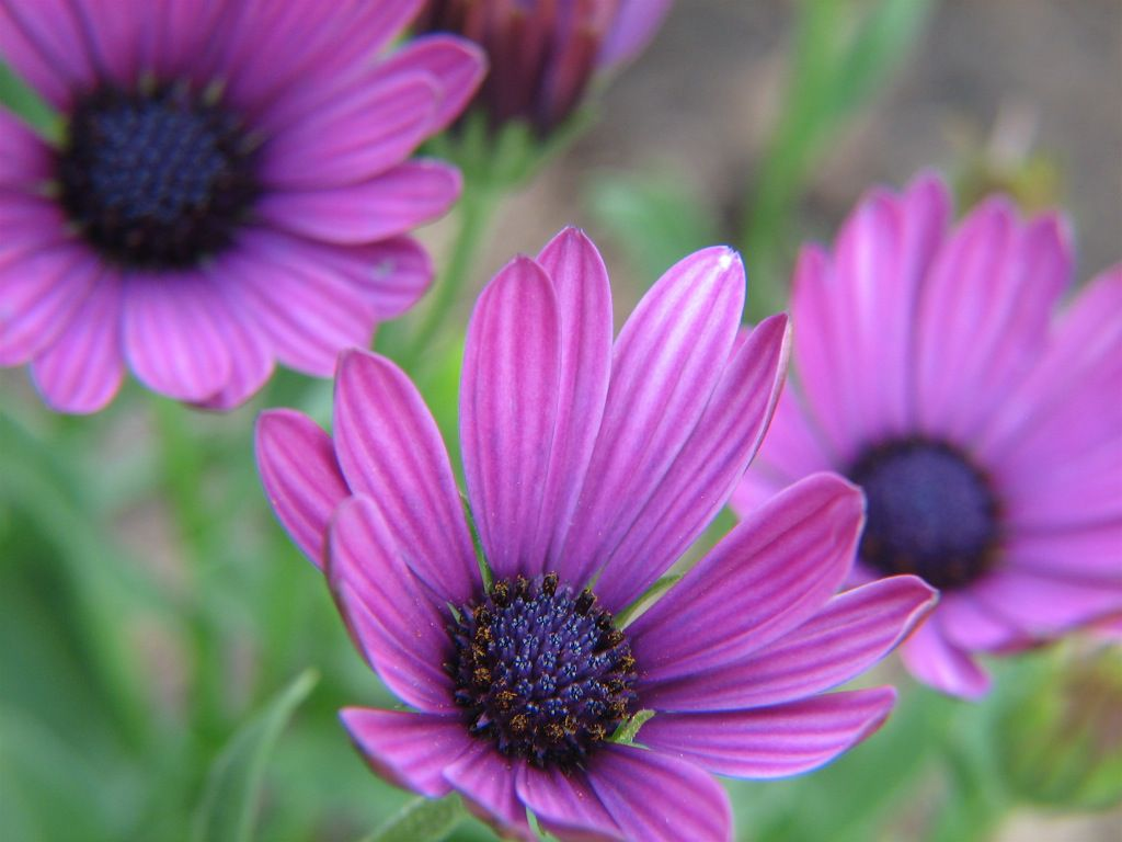 13 plants with daisy like flowers izmirmasajfo Choice Image