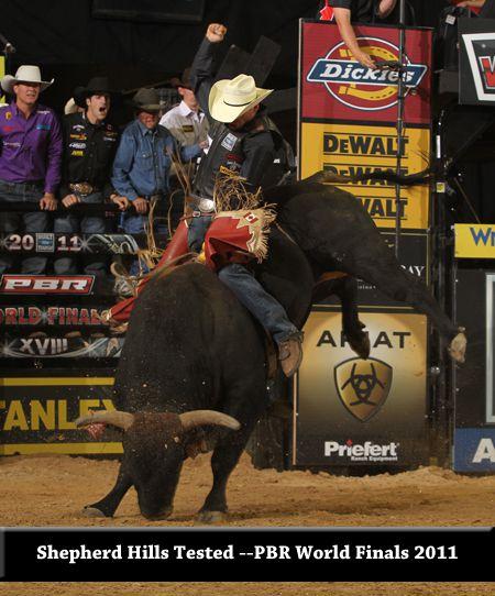 bull Shepherd Hills Tested