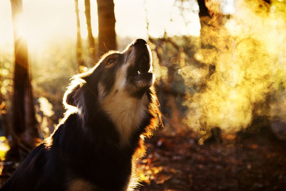 how to stop a dog from barking excessively