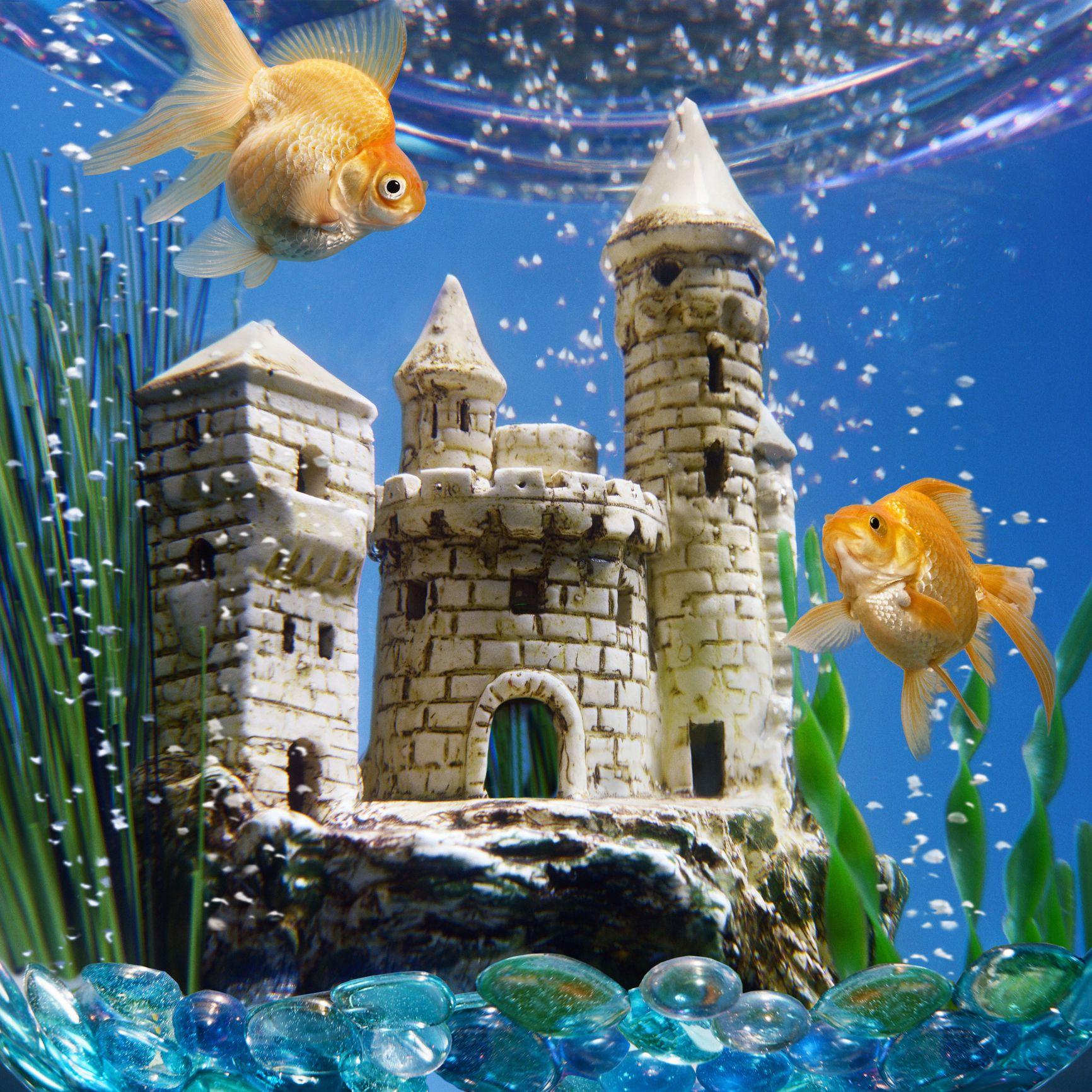 Benefits and Equipment for Aquarium Water Movement
