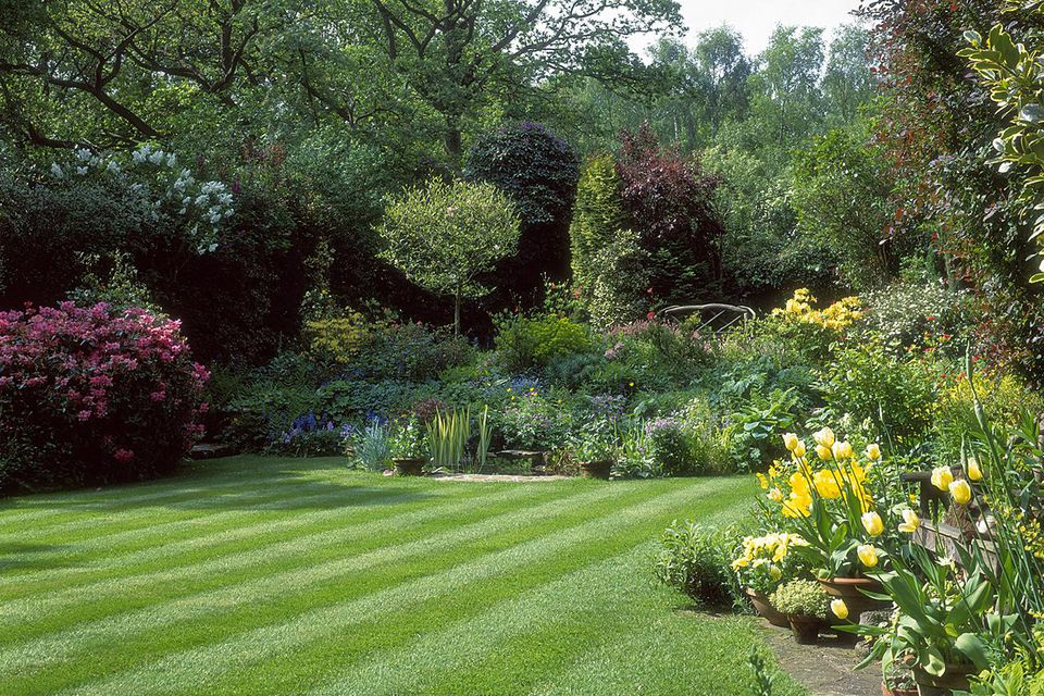 Small, suburban, manicured, striped lawn, small pond, and garden enclosed by large deciduous trees, azaleas, etc.