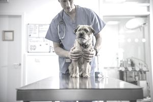 Portrait of vet holding dog on table in veterinary office.