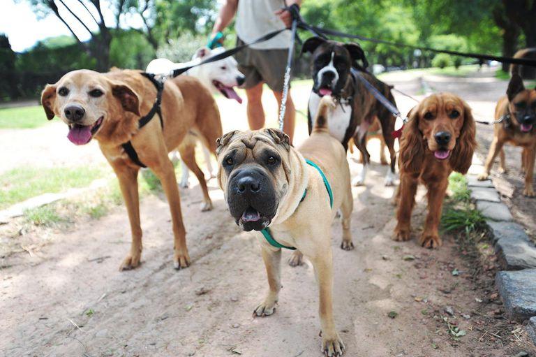 Dog Walking Basics