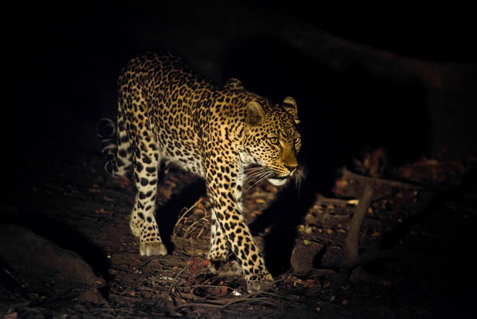 Top Tips for Enjoying a Night Safari in Africa