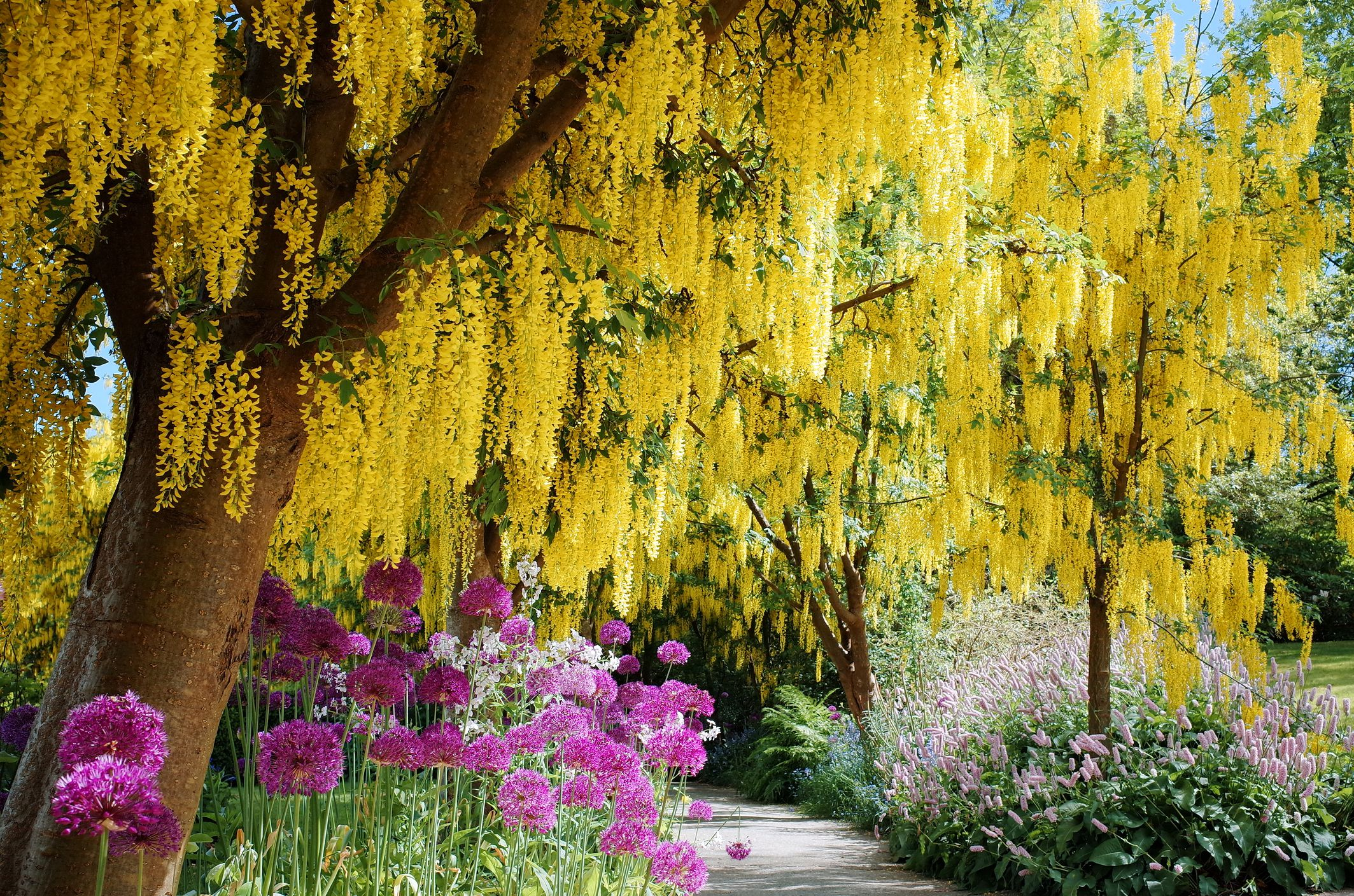 Zone Home Decor Flowering Trees For Landscaping Inspiration