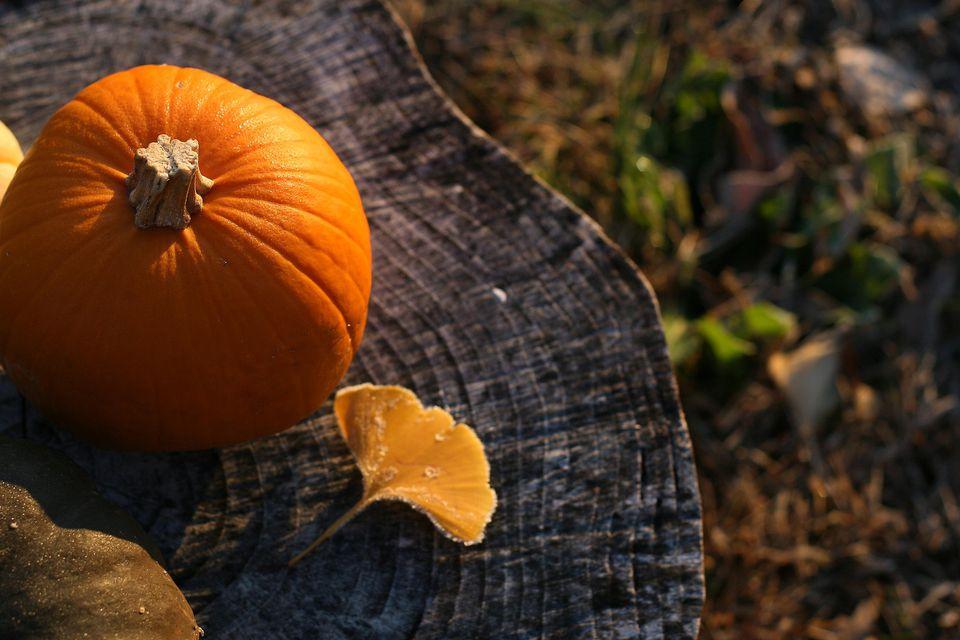 Pumpkin and ginkgo leaf