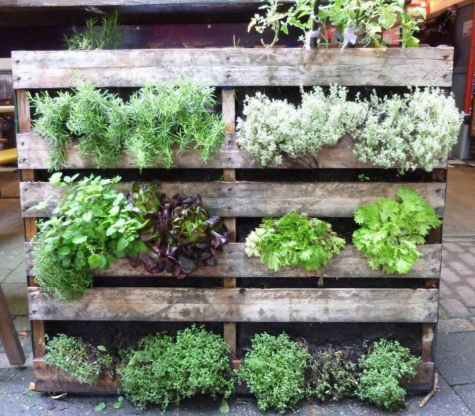 10 creative vegetable garden ideas vegetable garden made of pallettes workwithnaturefo