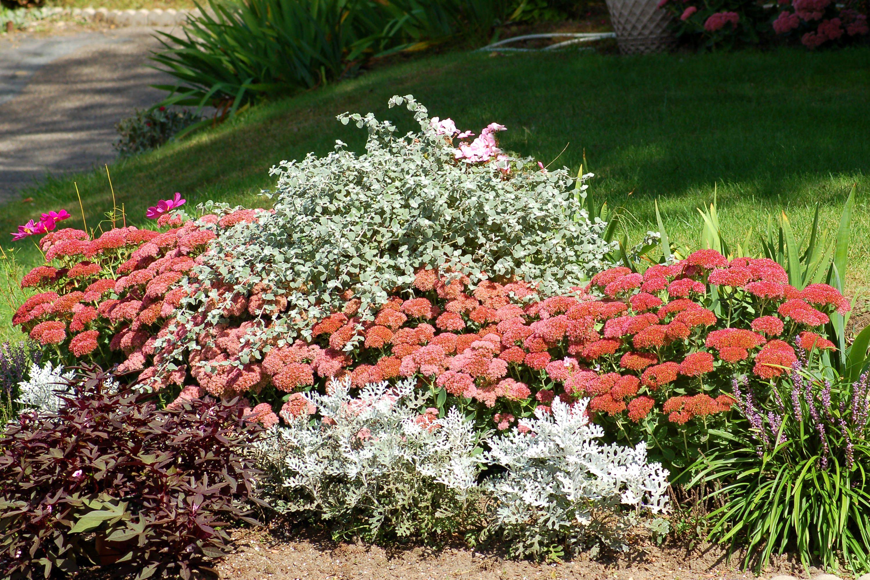 Садовая многолетняя герань: фото, посадка и уход в открытом