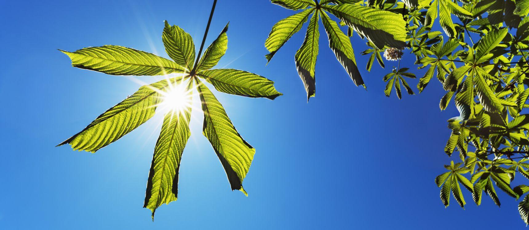 biology photosynthesis quiz