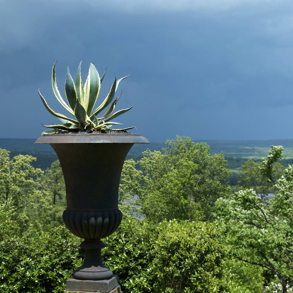 container gardening picture of agave