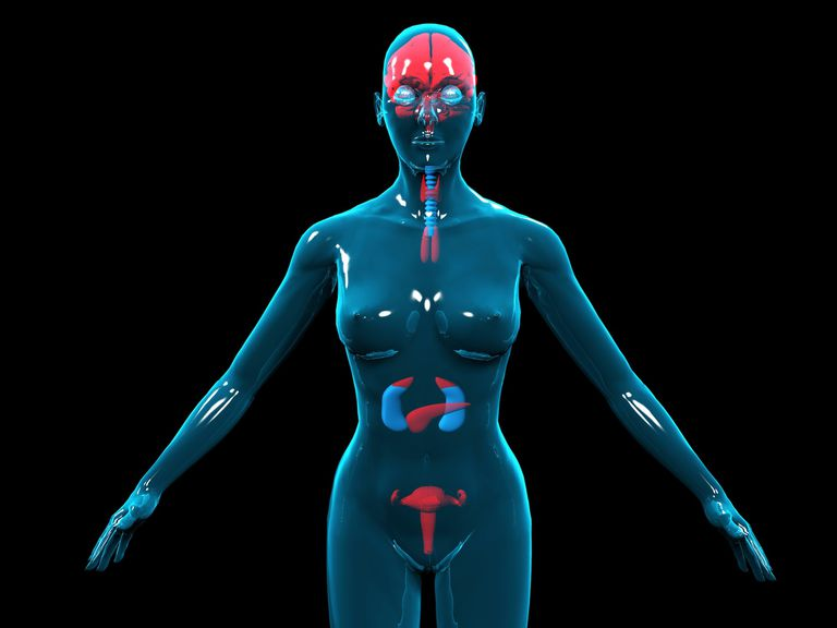 Endocrine System Everything You Need To Know