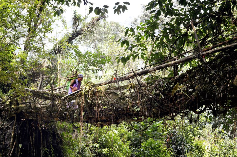 A woman crossing a root bridge.
