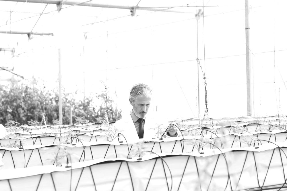 otanist examining plants in greenhouse