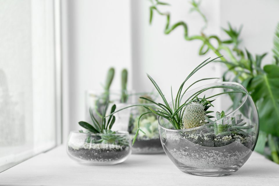 Terrariums on windowsill