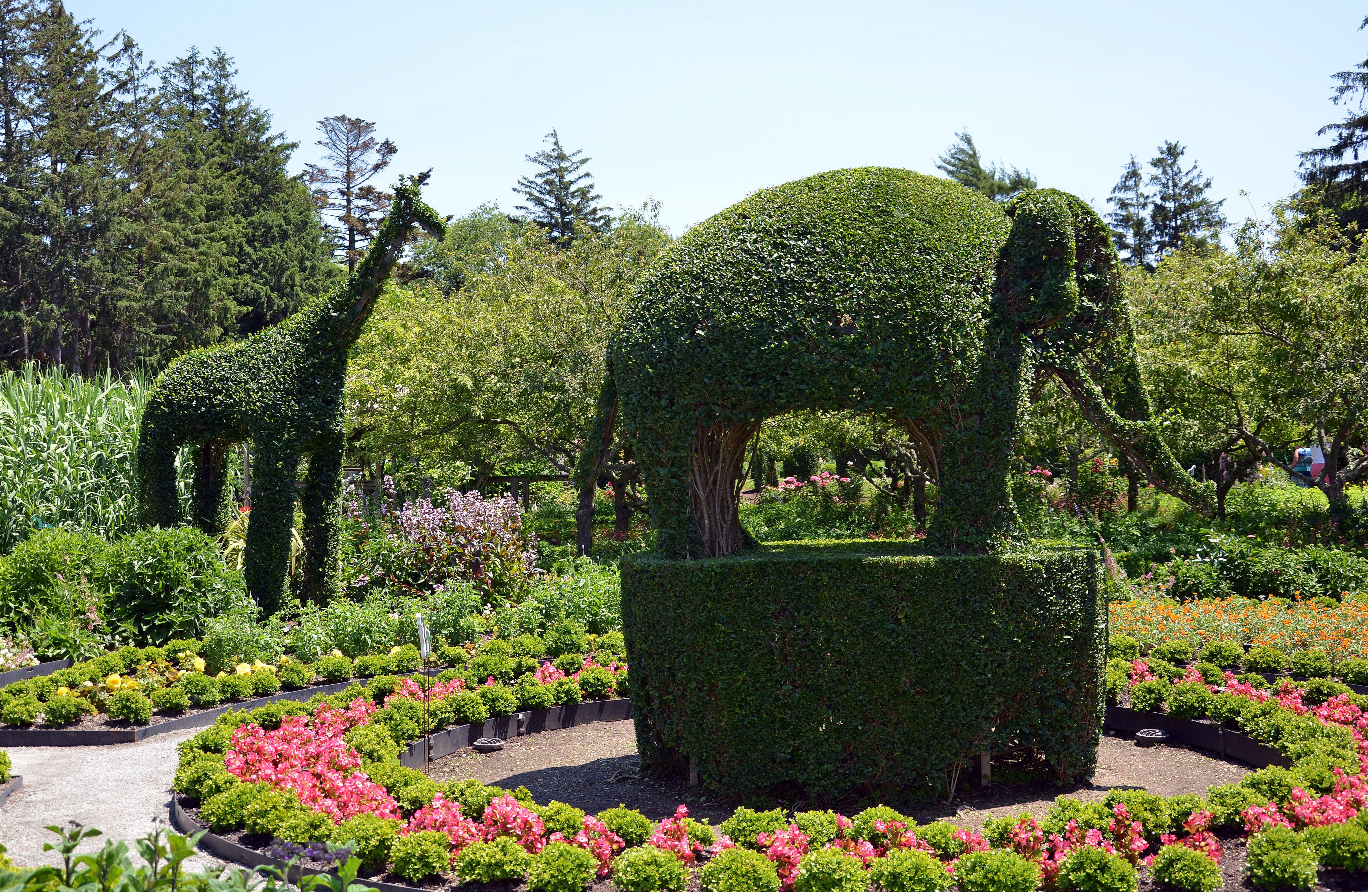 animal garden. Animal Garden