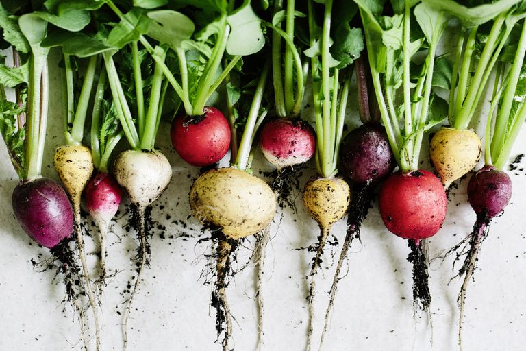 Several root vegetables lined up