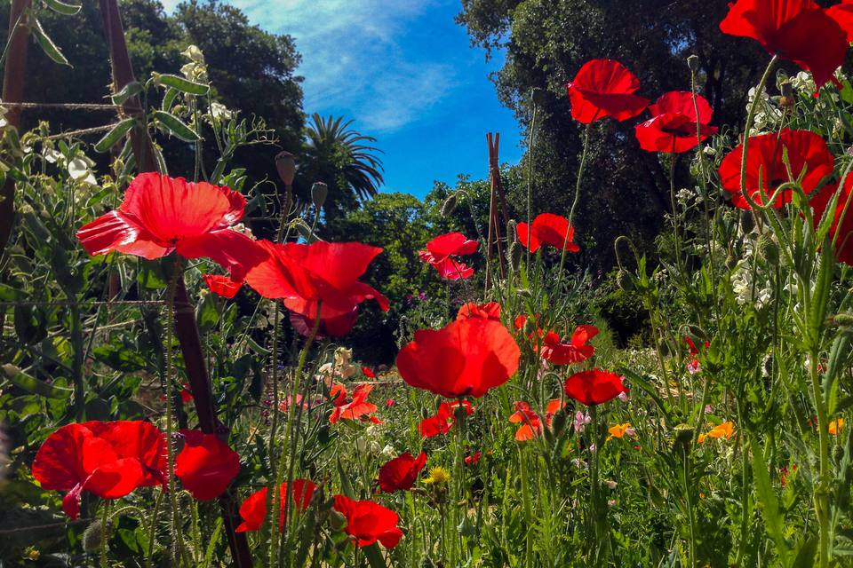 The Best Gardens You Can Visit in Silicon Valley