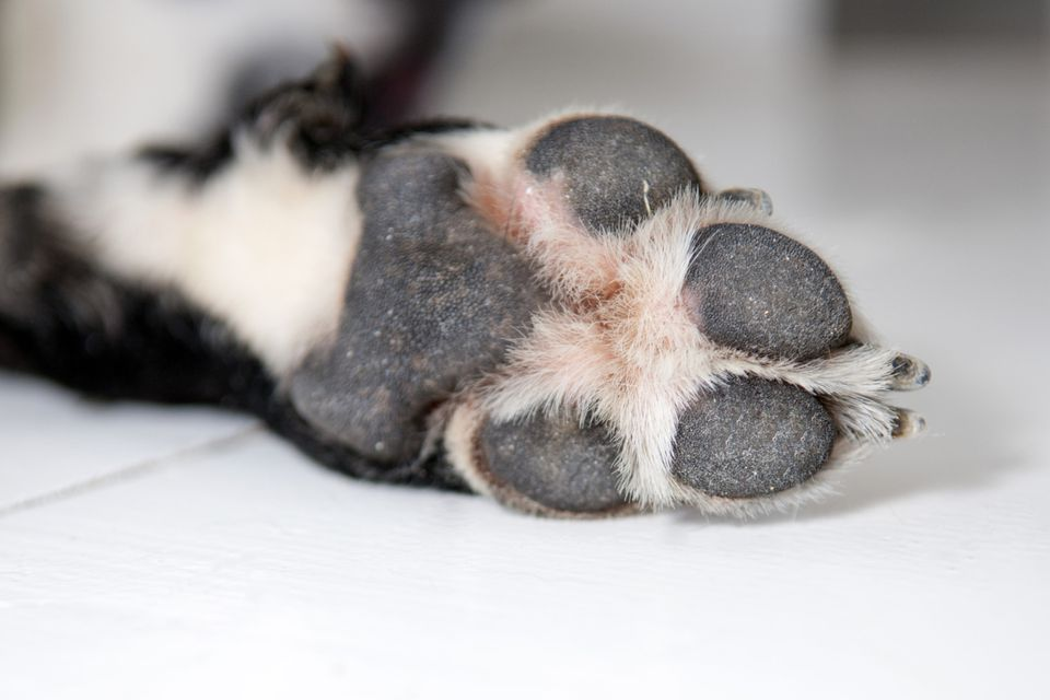 Why Do Dog S Paws Smell Like Popcorn