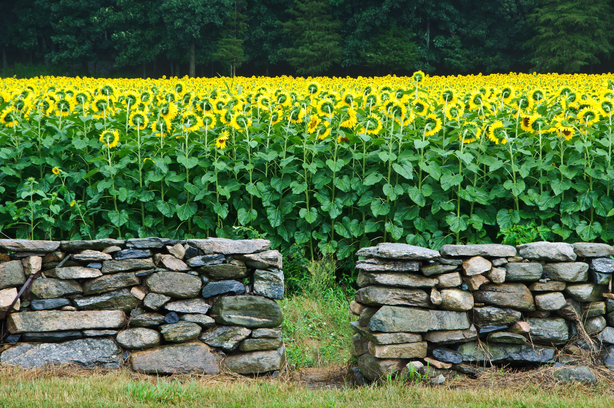 Building stone retaining walls in 16 easy steps how much stone do i need to build a wall amipublicfo Choice Image