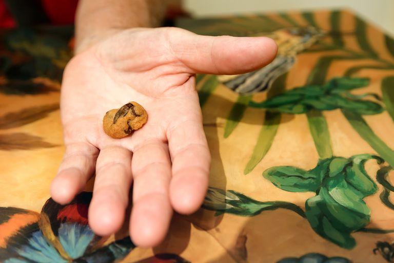 Cricket cookie