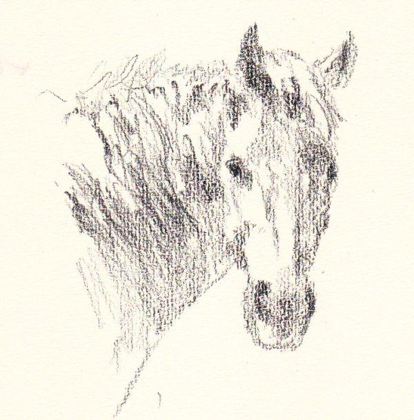 sketch on Lana Dessin