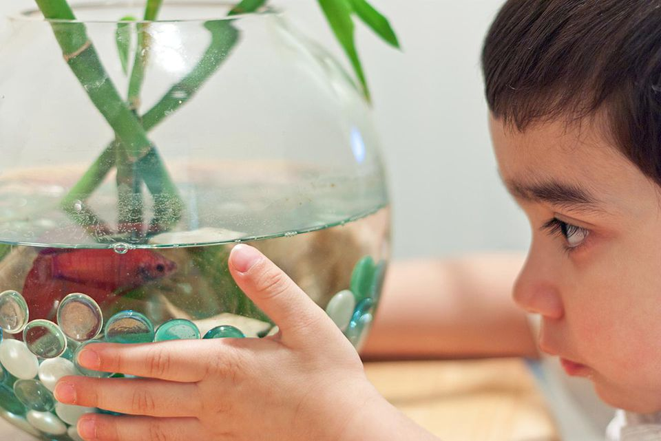 Young Boy looking at fish bowl.