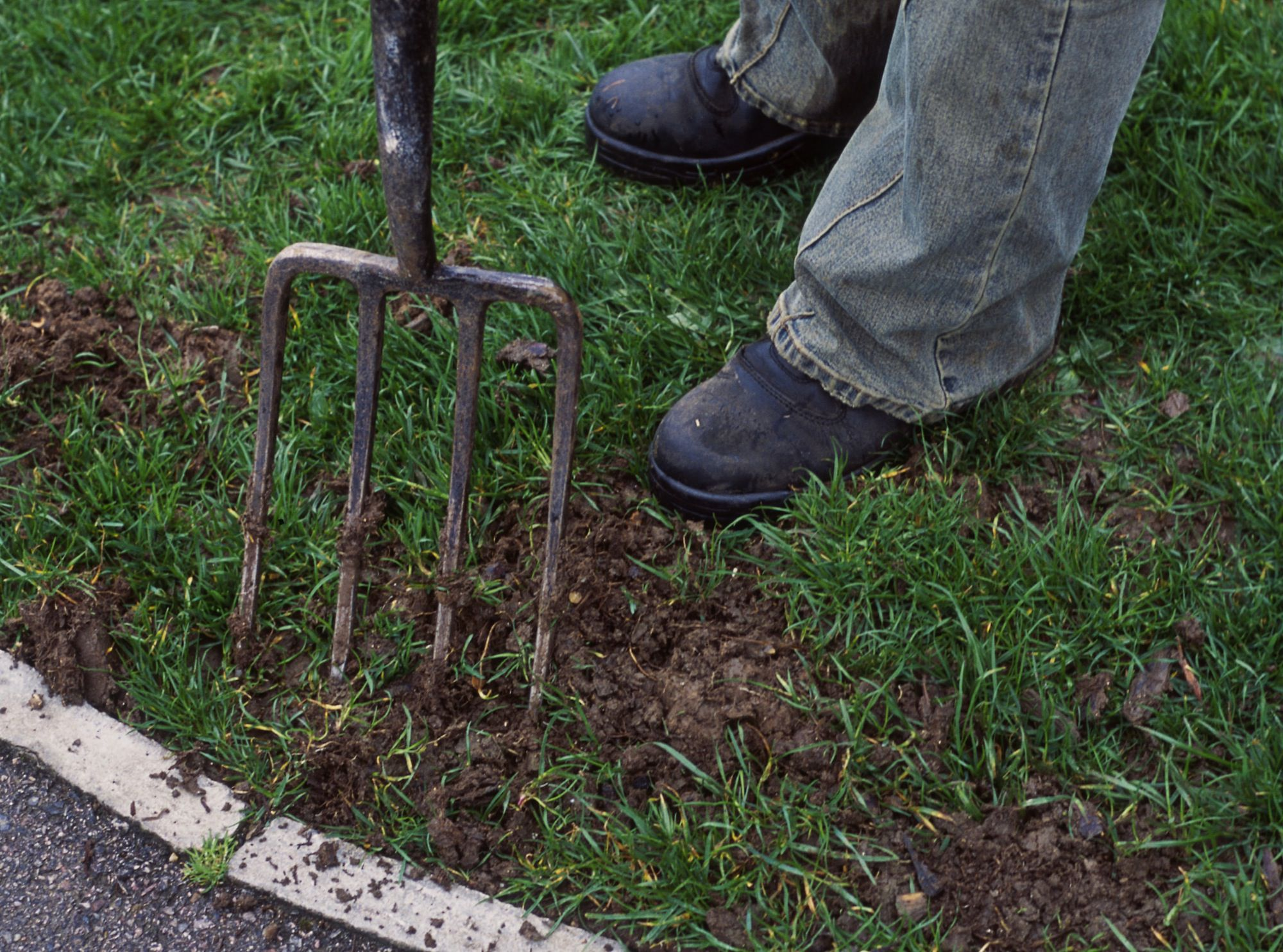 techniques for repairing bare spots in your lawn