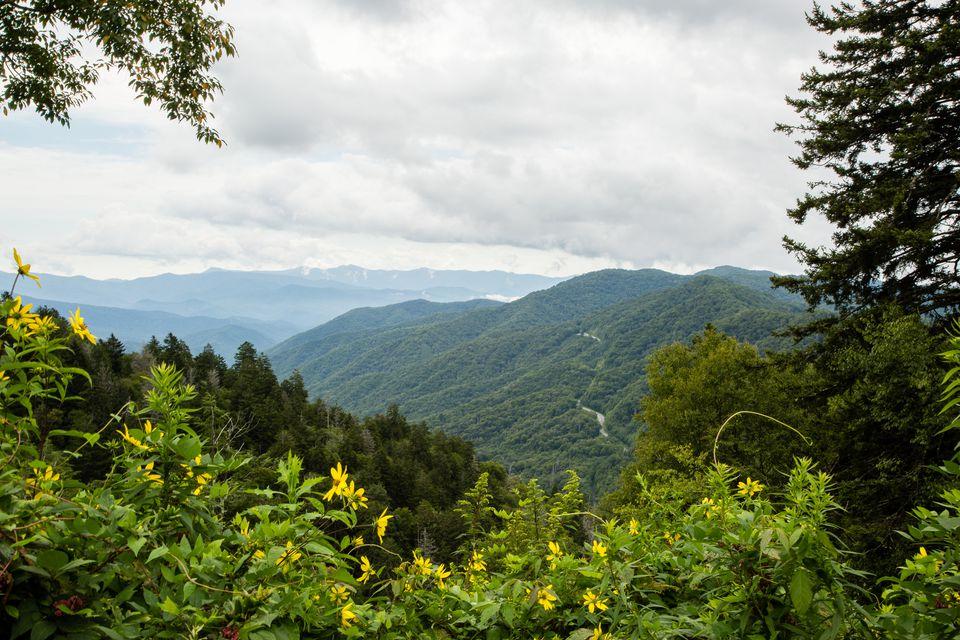 Great Smoky Mountains National Park Overlook into North Carolina