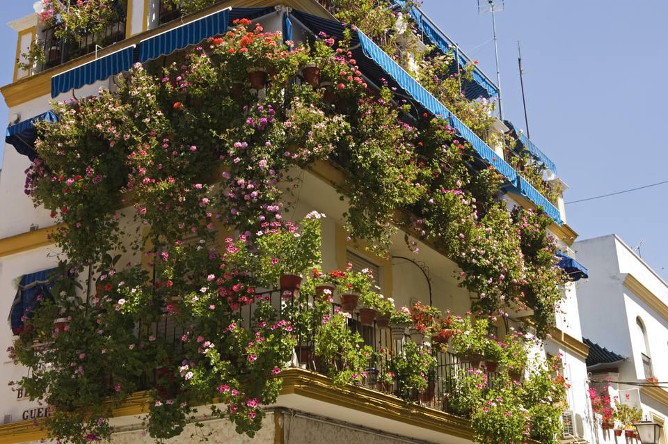 balcony garden. Flowers For Balcony Gardens Garden E
