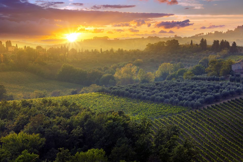 sunset over a vineyard in Tuscany Italy