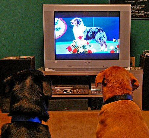 Photo of Dogs Watching Television